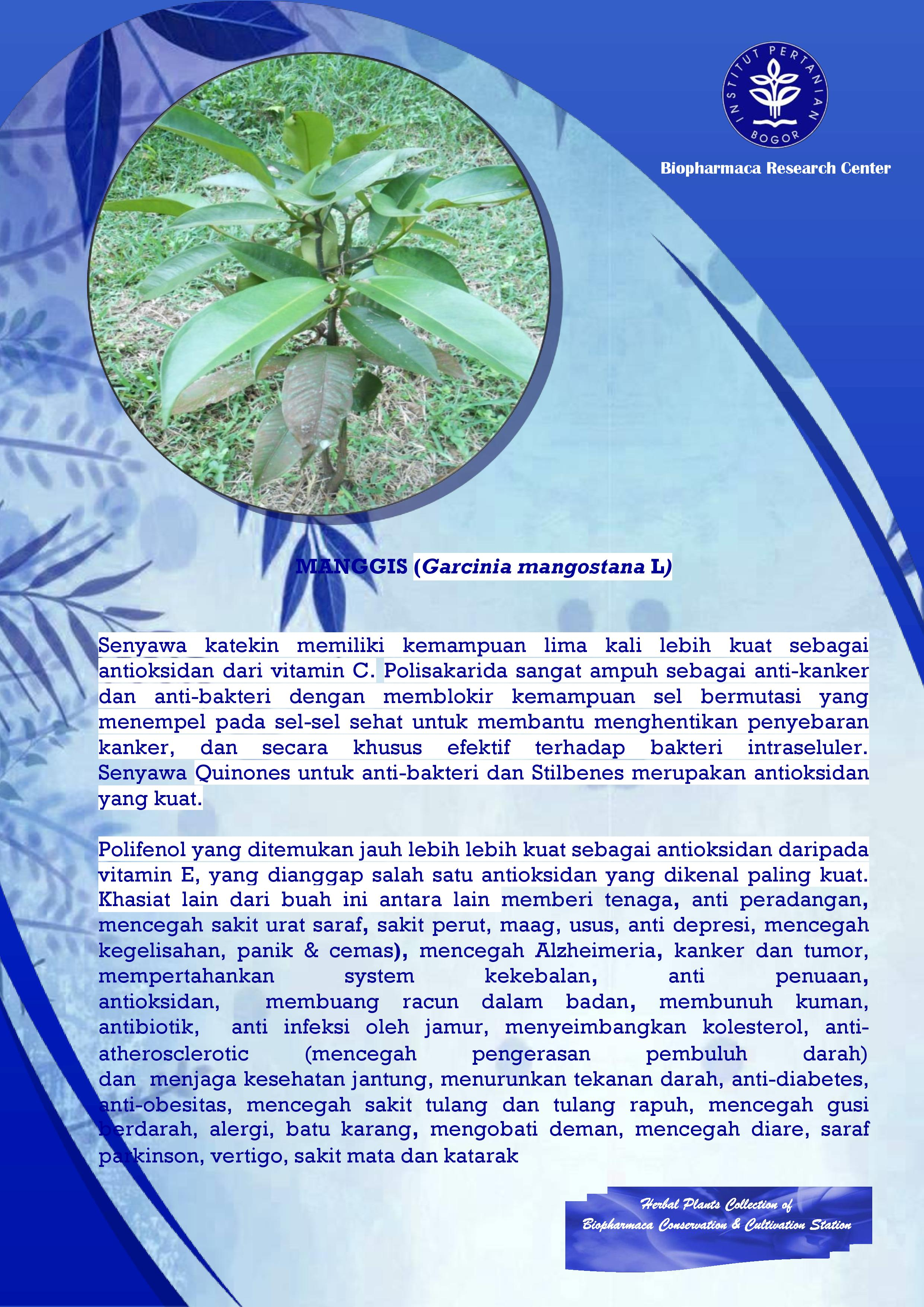 koleksi tanaman herbal ukbb